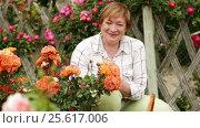 Купить «mature woman gardener taking care of bush roses», видеоролик № 25617006, снято 16 июня 2016 г. (c) Яков Филимонов / Фотобанк Лори