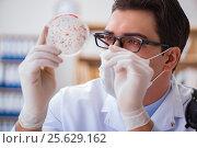 Купить «Doctor studying virus bacteria in the lab», фото № 25629162, снято 30 января 2017 г. (c) Elnur / Фотобанк Лори