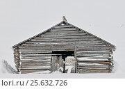 Купить «Ural owl (Strix uralensis) sitting on top of wooden barn, Kuusamo Finland February», фото № 25632726, снято 17 января 2019 г. (c) Nature Picture Library / Фотобанк Лори