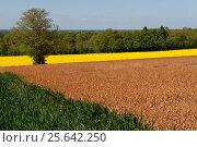 Купить «Живописные поля весной», фото № 25642250, снято 14 мая 2016 г. (c) Татьяна Кахилл / Фотобанк Лори
