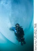 Купить «Diver examining broken ice formations underwater. Lake Baikal, Russia, Lake Baikal, Siberia, Russia.», фото № 25652766, снято 24 февраля 2019 г. (c) Nature Picture Library / Фотобанк Лори