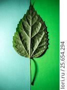 Зелёный лист растения на зелёном фоне разных оттенков. Стоковое фото, фотограф V.Ivantsov / Фотобанк Лори