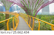 Купить «Walking on  bridge at Gardens by the Bay Singapore, Southeast Asia», видеоролик № 25662434, снято 27 февраля 2017 г. (c) Кирилл Трифонов / Фотобанк Лори