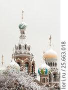 Купить «Зимний Санкт-Петербург. Купола Спаса-на-Крови», эксклюзивное фото № 25663018, снято 16 января 2010 г. (c) Александр Алексеев / Фотобанк Лори