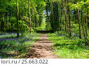 Купить «Маленькая тропинка в весеннем лесу», фото № 25663022, снято 15 мая 2016 г. (c) Татьяна Кахилл / Фотобанк Лори