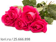 Купить «Розовые розы, букет на белом фоне», фото № 25666898, снято 6 февраля 2017 г. (c) Юлия Бабкина / Фотобанк Лори