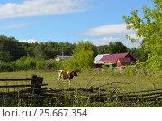 Деревенский пейзаж с бычком. Стоковое фото, фотограф Наталья Тагирова / Фотобанк Лори