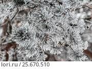 Snow Covered Pine Tree. Стоковое фото, фотограф Николай Чутчиков / Фотобанк Лори