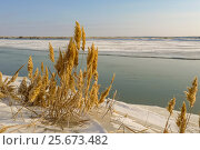 Купить «Syrdarya River in January, Baikonur, Kazakhstan», фото № 25673482, снято 30 января 2010 г. (c) Игорь Овсянников / Фотобанк Лори