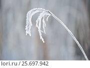 Купить «4 Season winter,beautiful,beauty of nature,blade of grass,calm,chilly,climate,closeup,closeup capture,closeup shot,cold,cold weather,countryside,covering...», фото № 25697942, снято 17 декабря 2016 г. (c) mauritius images / Фотобанк Лори