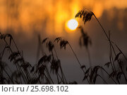 Купить «beautiful,beauty of nature,bed of reeds,cold,evening,Finland,fog,forest,forest edge,frost,frozen,horizont,ice,january,lake,landscape,light,mist,misty,nature...», фото № 25698102, снято 27 января 2017 г. (c) mauritius images / Фотобанк Лори