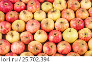 Купить «Red apples lying in rows», фото № 25702394, снято 9 октября 2016 г. (c) Андрей Липинский / Фотобанк Лори