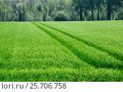 Купить «Зеленое поле со всходами», фото № 25706758, снято 13 мая 2016 г. (c) Татьяна Кахилл / Фотобанк Лори