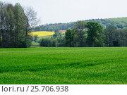 Купить «Зеленое поле со всходами», фото № 25706938, снято 13 мая 2016 г. (c) Татьяна Кахилл / Фотобанк Лори
