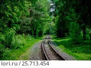 Купить «Железная дорога в лесу», фото № 25713454, снято 22 мая 2016 г. (c) Хайрятдинов Ринат / Фотобанк Лори