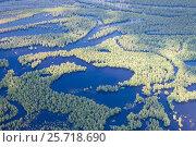 Затопленный лес в пойме реки, фото № 25718690, снято 19 июня 2015 г. (c) Владимир Мельников / Фотобанк Лори