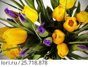 Купить «Букет цветов из жёлтых тюльпанов и ирисов», фото № 25718878, снято 8 марта 2017 г. (c) Анна Рахимова / Фотобанк Лори