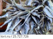 Купить «The Bundle of sun-dried fish at the fish shop in Samara», фото № 25727726, снято 20 ноября 2016 г. (c) Юлия Батурина / Фотобанк Лори