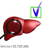 Red Human liver with mesoscope. Стоковая иллюстрация, иллюстратор Дмитрий Самойленко / Фотобанк Лори