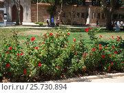 Кусты роз. Стоковое фото, фотограф Dan / Фотобанк Лори