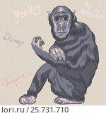 Купить «Vector funny cartoon monkey Chimpanzee», иллюстрация № 25731710 (c) Коваленкова Ольга / Фотобанк Лори