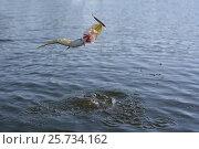 Купить «Ловля щуки спиннингом», фото № 25734162, снято 25 июня 2019 г. (c) Юрий Фатеев / Фотобанк Лори