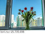 Купить «Букет тюльпанов на окне новой квартиры», фото № 25735698, снято 8 марта 2017 г. (c) Сергеев Валерий / Фотобанк Лори