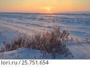 Купить «Заснеженный берег озера Байкал на восходе солнца зимним утром в районе мыса Кадильный», фото № 25751654, снято 7 марта 2017 г. (c) Овчинникова Ирина / Фотобанк Лори