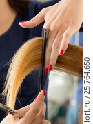 Купить «Close up view of female hairdresser hands cutting hair tips», фото № 25764650, снято 12 июня 2016 г. (c) Людмила Дутко / Фотобанк Лори