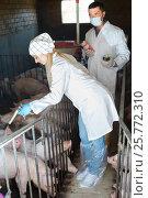 Купить «Two glad veterinarians in white coats in pigsty», фото № 25772310, снято 21 октября 2018 г. (c) Яков Филимонов / Фотобанк Лори