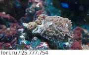 Купить «Кораллы, полипы и другие обитатели подводного мира», видеоролик № 25777754, снято 17 марта 2017 г. (c) Parmenov Pavel / Фотобанк Лори