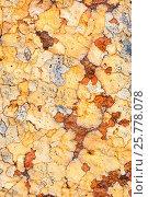 Купить «Lichens on rock, Torridon, Scotland, UK, November.», фото № 25778078, снято 17 августа 2018 г. (c) Nature Picture Library / Фотобанк Лори