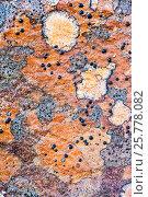 Купить «Lichens on rock, Torridon, Scotland, UK, November.», фото № 25778082, снято 17 августа 2018 г. (c) Nature Picture Library / Фотобанк Лори