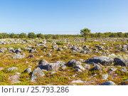 Купить «Поляна с одиноким деревом и камнями на острове Большая Муксалма Соловецкого архипелага», фото № 25793286, снято 26 августа 2013 г. (c) Дмитрий Тищенко / Фотобанк Лори