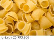 Купить «Lumache rigate pasta», фото № 25793866, снято 13 октября 2016 г. (c) Wavebreak Media / Фотобанк Лори