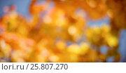 Купить «Defocused image of maple leaves», фото № 25807270, снято 22 февраля 2018 г. (c) Wavebreak Media / Фотобанк Лори