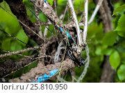 Купить «Грязный велосипед в велосипедном походе по Дону в мае 2016», фото № 25810950, снято 1 мая 2016 г. (c) Матвей Солодовников / Фотобанк Лори
