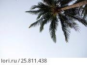 Пальмы на фоне неба. Стоковое фото, фотограф Souchko Jegor / Фотобанк Лори