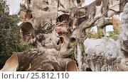 Купить «Hang Nga Guesthouse Crazy House, design Interior and Exterior landmark architecture Odd House», видеоролик № 25812110, снято 1 октября 2016 г. (c) Mikhail Davidovich / Фотобанк Лори