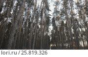 Купить «Winter pine forest», видеоролик № 25819326, снято 22 января 2017 г. (c) Олег Башкир / Фотобанк Лори