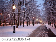 Alley in winter park with snowy trees and lanterns at evening. Стоковое фото, фотограф Losevsky Pavel / Фотобанк Лори