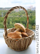 Купить «Raw fresh Mushrooms in basket on white windowsill at home», фото № 25837422, снято 30 сентября 2015 г. (c) Losevsky Pavel / Фотобанк Лори