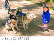 Купить «Little girl in blue jacket standing and looking at Dogs in harness, rolling scooter in park», фото № 25837722, снято 9 мая 2014 г. (c) Losevsky Pavel / Фотобанк Лори