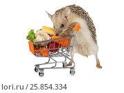 Купить «African hedgehog with a basket full of products», фото № 25854334, снято 27 марта 2017 г. (c) Алексей Кузнецов / Фотобанк Лори