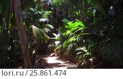 Купить «path in jungle woods with palm trees at africa», видеоролик № 25861474, снято 13 февраля 2017 г. (c) Syda Productions / Фотобанк Лори