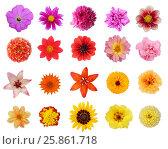 Купить «Set twenty flowers isolated on white background», фото № 25861718, снято 9 июля 2020 г. (c) Елена Зинина / Фотобанк Лори
