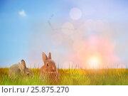 Купить «Composite image of close-up of easter bunny», фото № 25875270, снято 9 декабря 2018 г. (c) Wavebreak Media / Фотобанк Лори