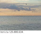 Купить «Стая чаек над морем на закате», фото № 25880634, снято 21 марта 2017 г. (c) DiS / Фотобанк Лори