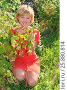 Купить «Девушка в красном платье собирает малину», эксклюзивное фото № 25880814, снято 7 июля 2014 г. (c) Юрий Морозов / Фотобанк Лори