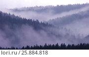 Купить «Swaying tops of firs. Mountain pine forest. Gray sky. Small fog. Haze. Autumn in the Ural Mountains.», видеоролик № 25884818, снято 15 марта 2017 г. (c) Вячеслав Позднышев / Фотобанк Лори